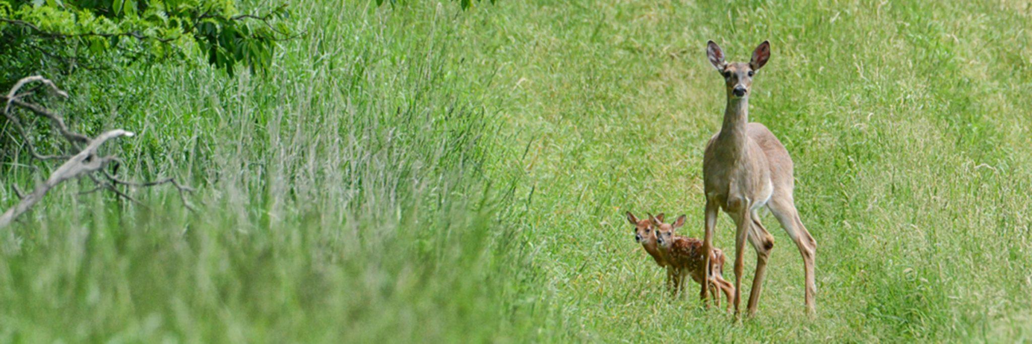 Photo of Mama and Baby Deer