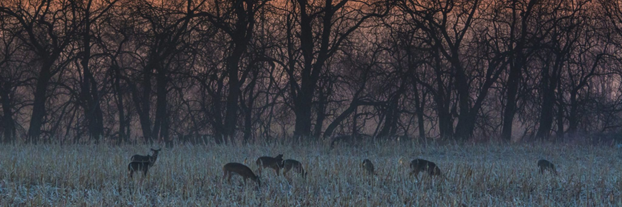 Photo of Deer Grazing